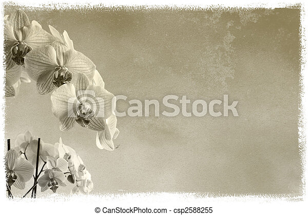 background floral background / composition with orchids on rough texture with place for text or image - csp2588255