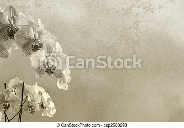 background floral composition with orchids and rough texture with place for text or image - csp2588293