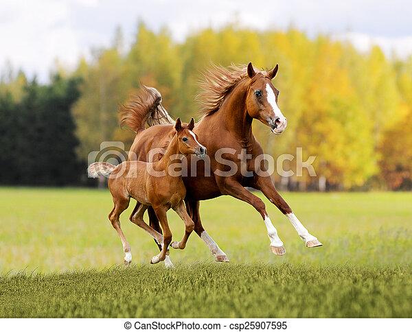 arabian free horse in autumn background