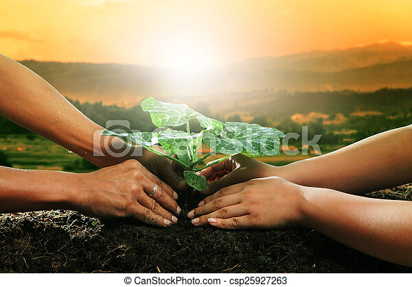 human hand planting young plant together on dirt soil against be