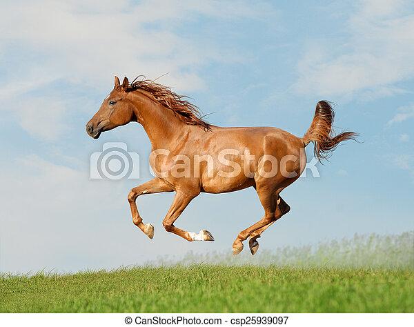 Stock fotografieken van paarde arabisch kosteloos for Van nederlands naar arabisch