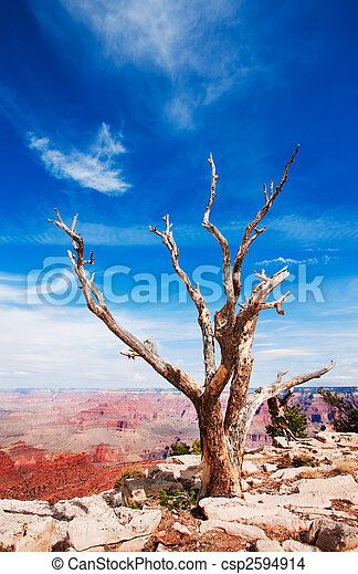 Dead tree at the rim of the Grand Canyon - csp2594914