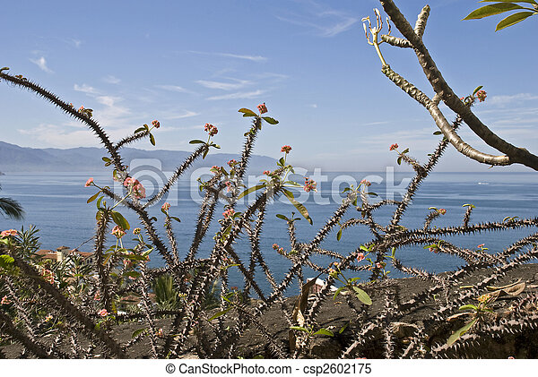 pacific ocean plants  Stock Photo - Thorny
