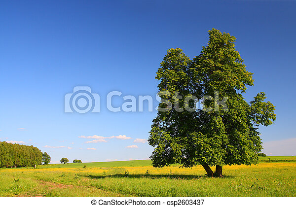 summer landscape with lime-tree - csp2603437
