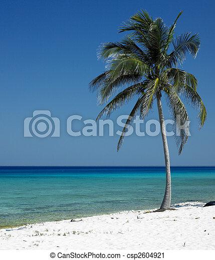 Mar�a la Gorda, Pinar del R�o Province, Cuba - csp2604921