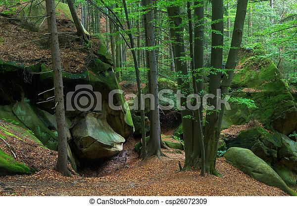 Szenerie, waldland - csp26072309