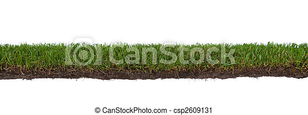 grass with roots and dirt - csp2609131
