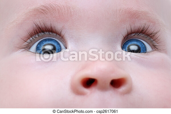 baby blue eyes - csp2617061