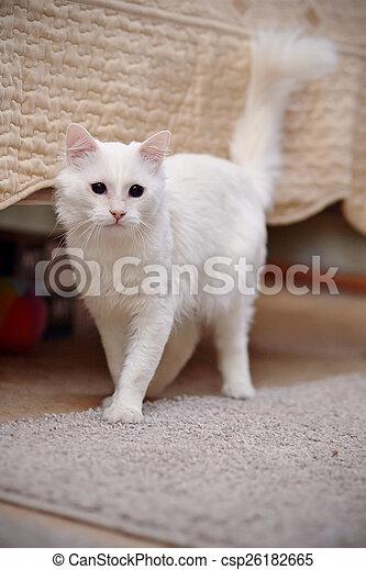 White fluffy cat.