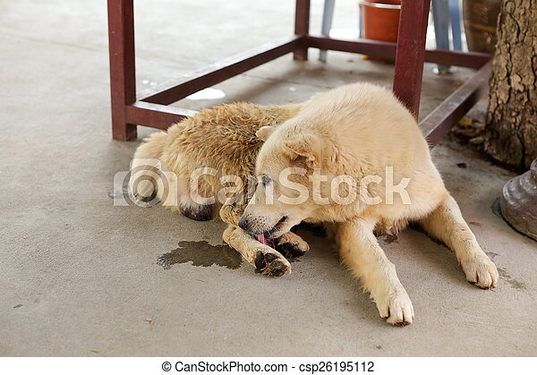 white Dog cleaning
