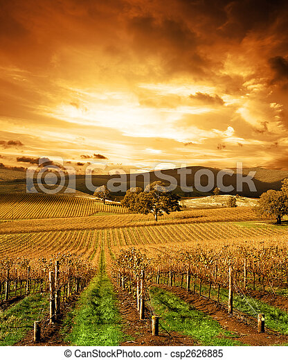 Stunning Sunset Vineyard - csp2626885