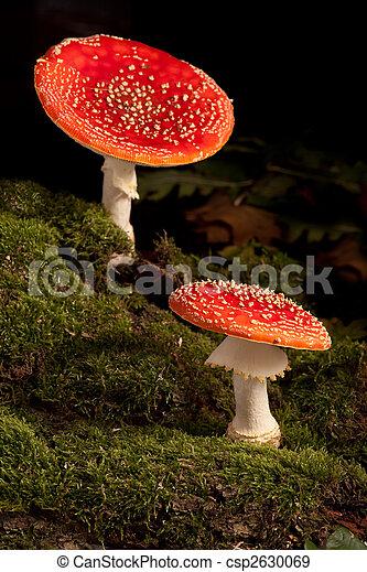 fly mushroom - csp2630069