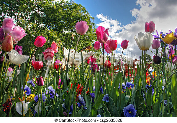 flowers in springtime - csp2635826
