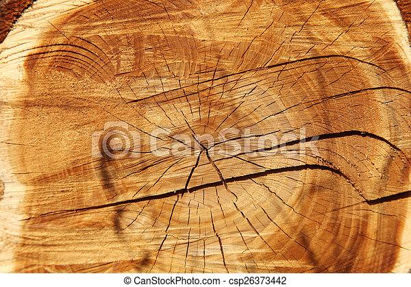 樹 - csp26373442
