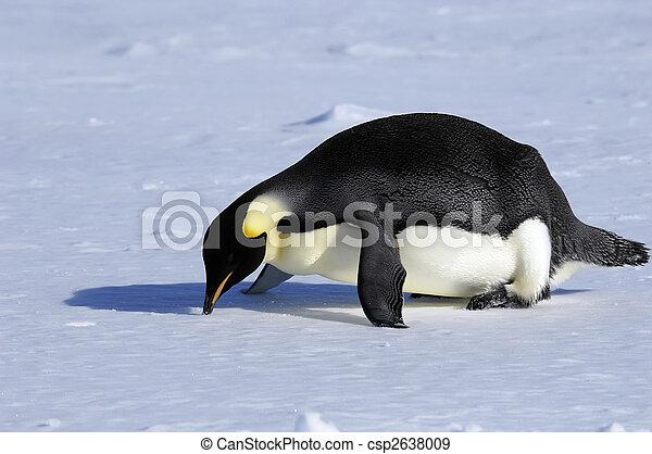 Penguin fallen on nose - csp2638009