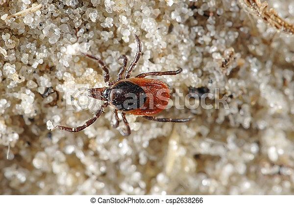 Tick on sandy backgound - csp2638266