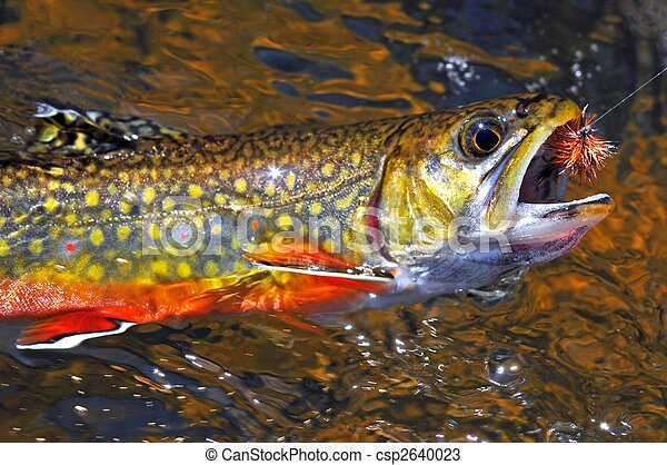 stock photos of brook trout beautiful brook trout caught Trout Fish Clip Art brooke trout clip art