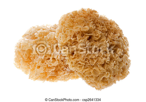 Edible White Fungus Isolated - csp2641334