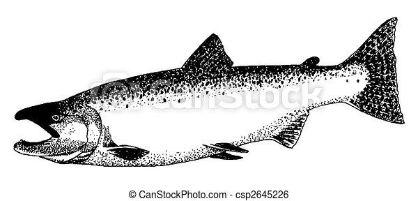 King Salmon - csp2645226