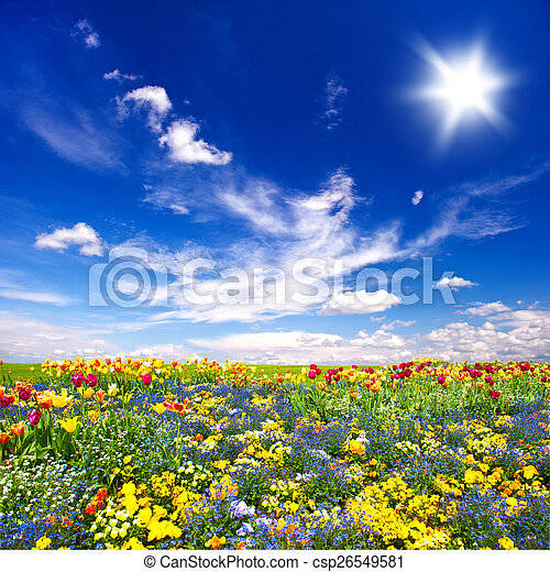 beautiful flowers meadow and cloudy blue sky