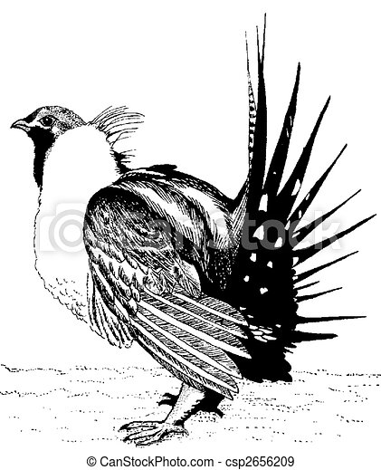 Greater Sage-Grouse - csp2656209