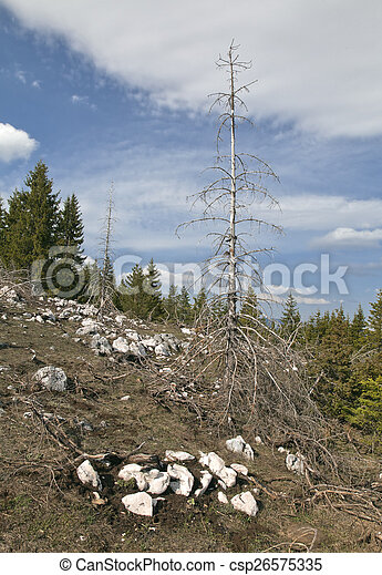 Dead forest in the mountains - csp26575335
