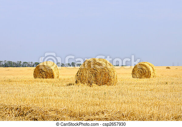 rural landscape with straw rolls - csp2657930