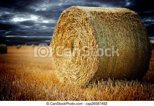 landwirtschaft - csp26587492