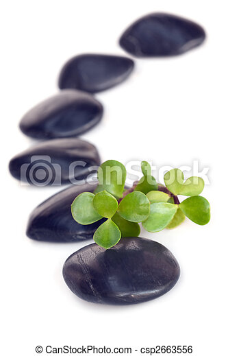 Massage Stones with Jade - csp2663556