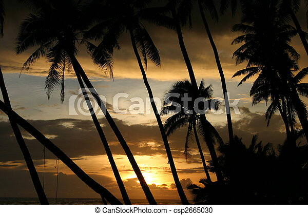 Beautiful tropical sunset through the coconut palms in Samoa - South Pacific - csp2665030