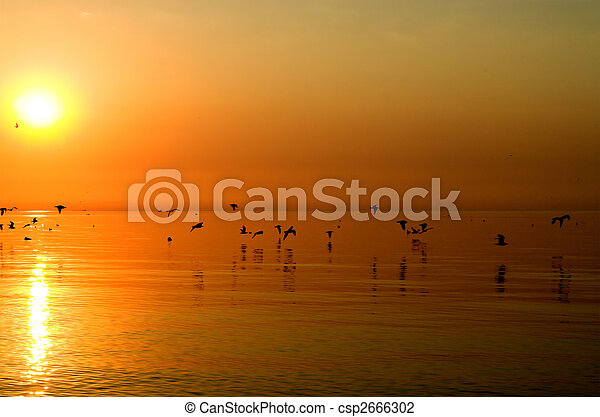Birds above orange sea - csp2666302