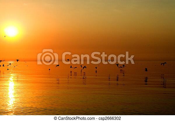 narancs, madarak, tenger, felül - csp2666302