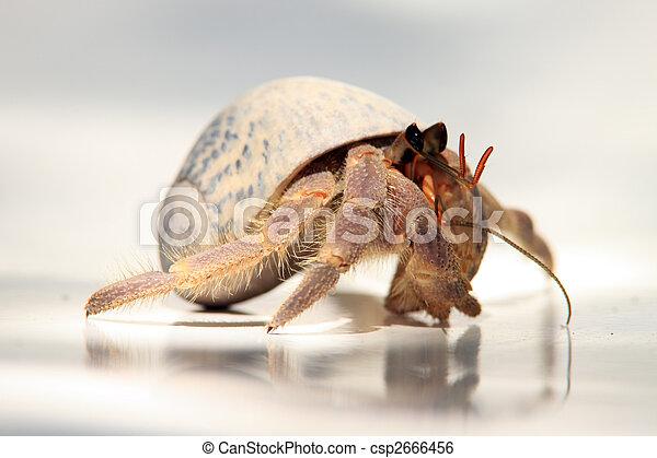 Hermit Crab - csp2666456