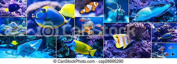 Stock fotografien von welt fische salzwasser aquarium for Salzwasser aquarium fische