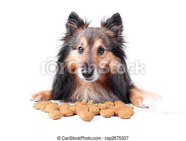 Eating dog - csp2675337