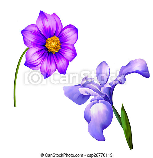 Illustration of purple dahlia flower spring flower isolated on white