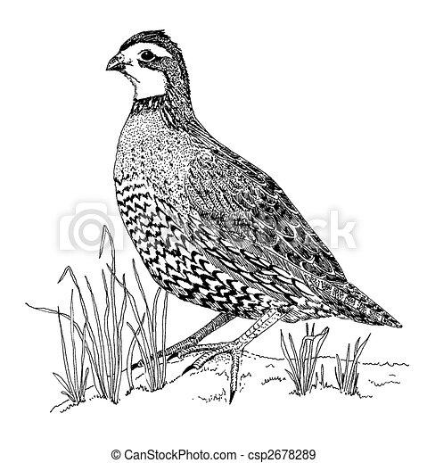 Quail Clip Art Black And White quail illustrations and clip art. 368 ... Quail Black And White Clipart