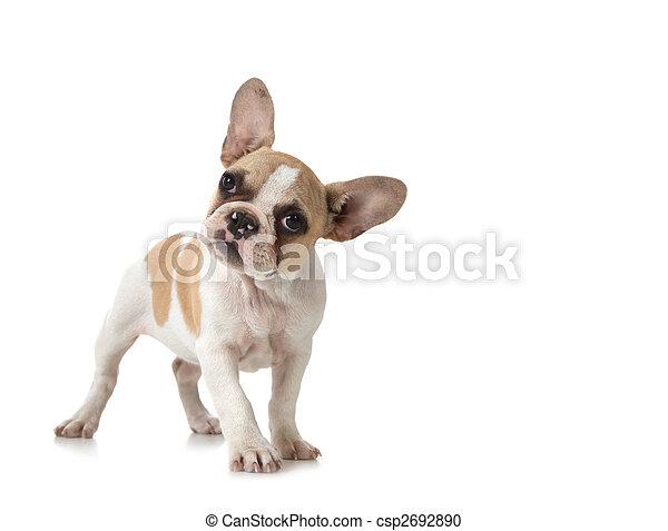 kíváncsi, másol, kutyus, kutya, hely - csp2692890
