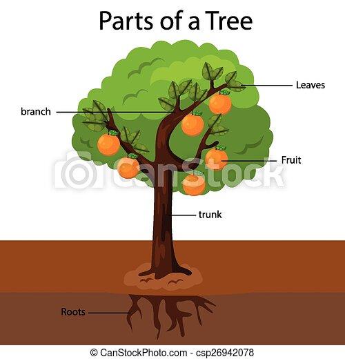 Ilustraciones vectoriales de rbol partes ilustrador for Un arbol con todas sus partes