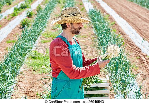 Farmer man harvesting onions in Mediterranean - csp26949543