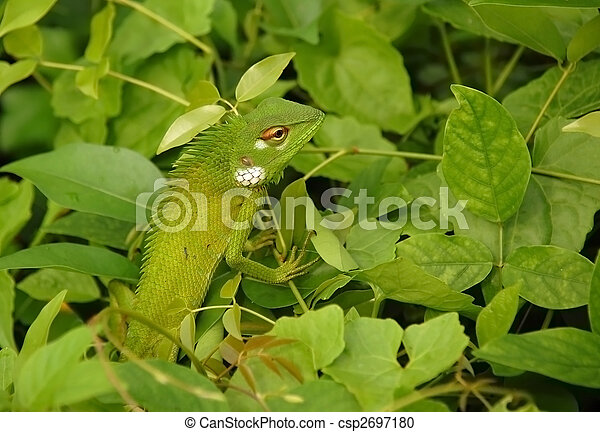 Variable Lizard In The Green Background - csp2697180