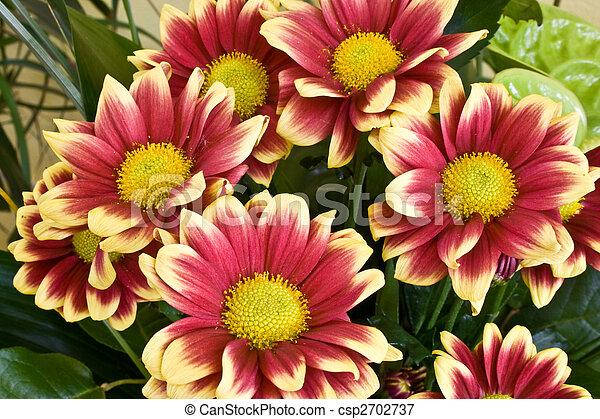 Flowers - csp2702737
