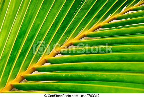 vivid palm leaf - csp2703317