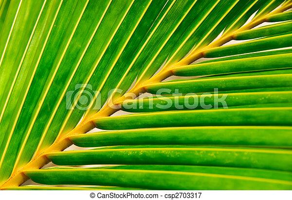 vivid palm leaf - csp2703317