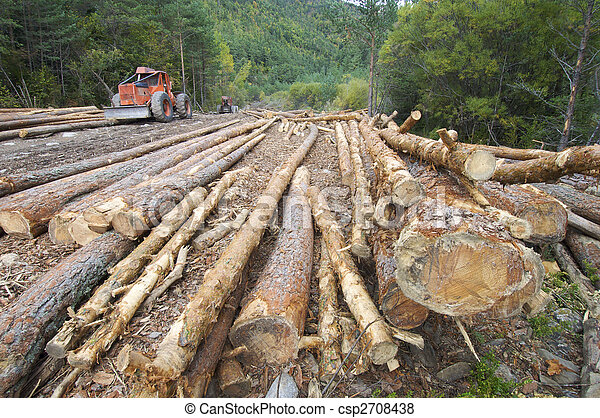 deforestation - csp2708438