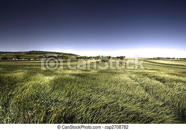 Green grain in windy day - csp2708782