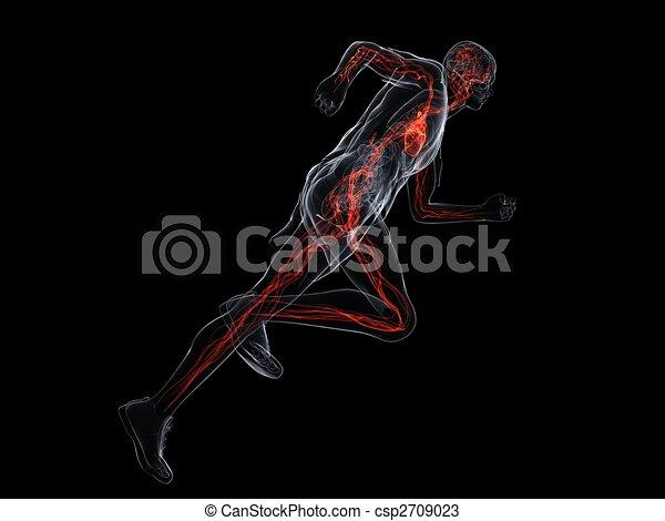 running - vascular system - csp2709023