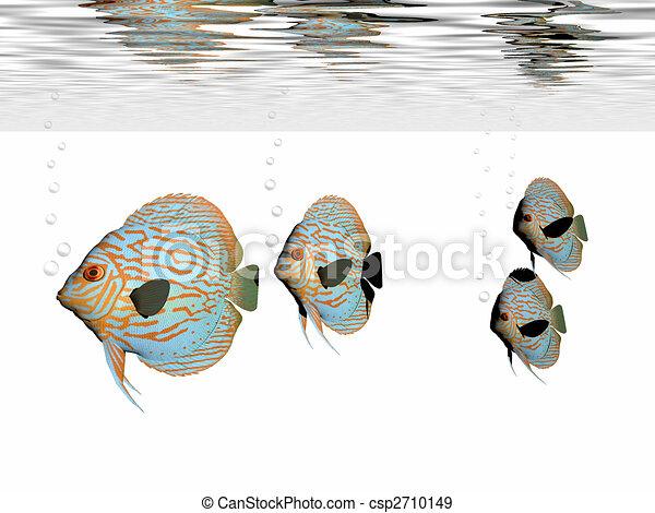 DISCUS FISH - csp2710149