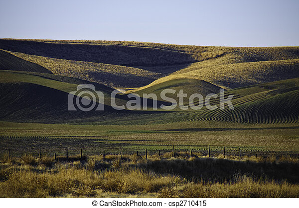 Winter wheat on the rolling hills - csp2710415