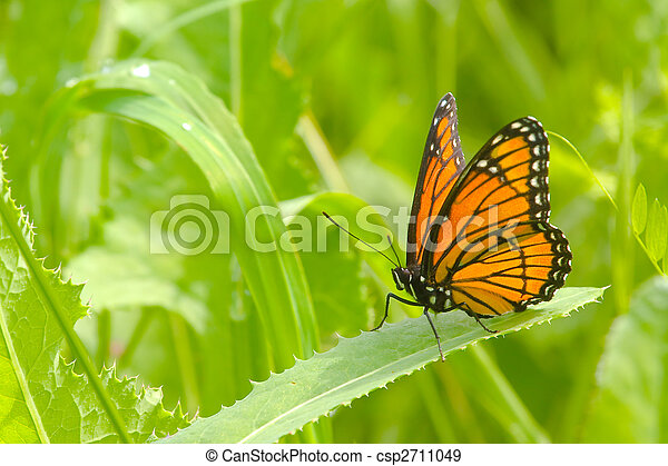 Monarch Butterfly - csp2711049